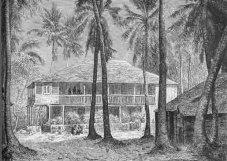 haiti-plantation